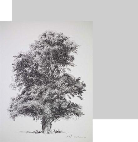 طراحی طبیعت + درخت