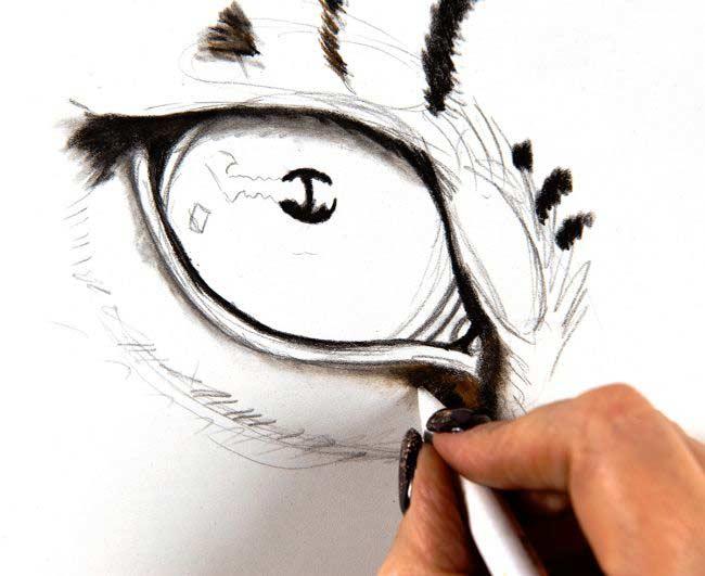 مرحله دوم نقاشی حیوانات