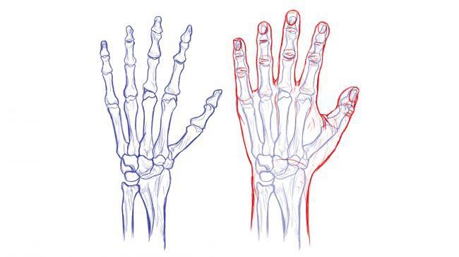 طراحی دست ها