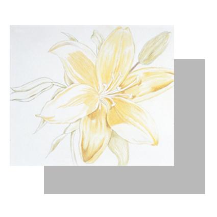 نقاشی گل لیلیوم