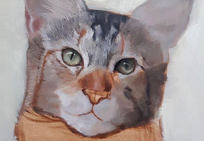 آموزش نقاشی حیوانات مرحله به مرحله