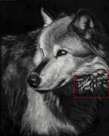 نقاشی حیوانات وحشی